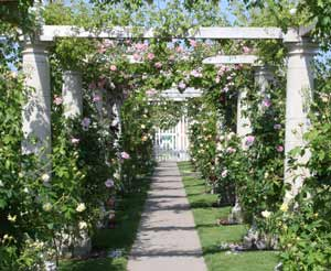 rose-arch