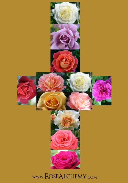 Rose Cross 500e-min